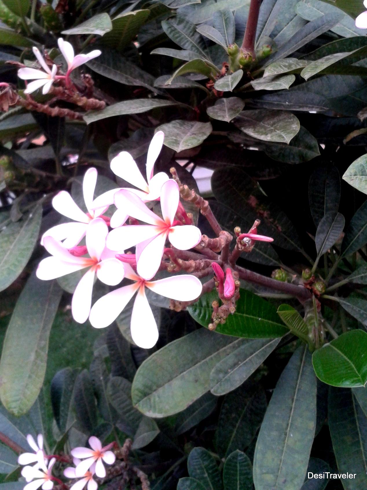 Common Dangerous Plants Some Poisonous Plants For Children Nature