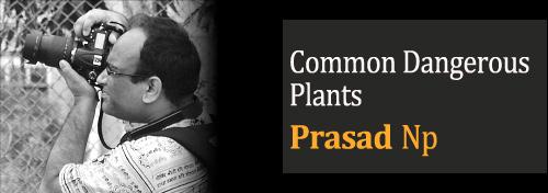 Common Dangerous Plants