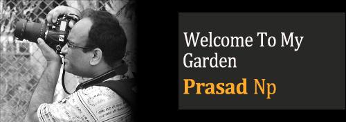 Welcome To My Garden - Gardening With Kids - Teaching Kids Gardening