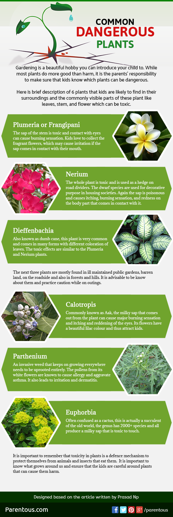 Know More About Common Dangerous Plants - Infographic